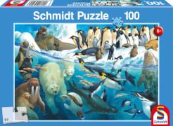 Schmidt Puzzle 56295 Tiere am Polarkreis, 100 Teile, ab 6 Jahre